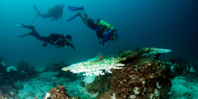 pearl diving image